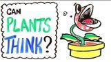 Μπορούν τα φυτά να σκεφτούν;