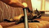 Η γάτα λατρεύει την ηλεκτρική σκούπα