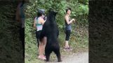 Путешественники встречают медведя