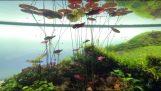 令人驚奇的水族館天野尚里斯本