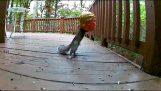 Trump Squirrel