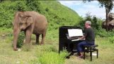 Playing Bach on piano for a blind elephant