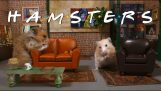 'Friends' remade with hamsters