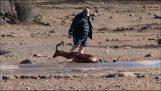 Um homem salva uma impala