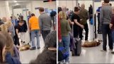 Dog Refuses To Go Through Airport Security