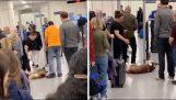 Pes odmítne projít letištní bezpečnostní