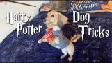 Dog only responds to Harry Potter spells