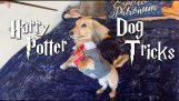 Куче реагира единствено на Хари Потър заклинания