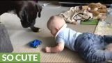 A dog gives a toy to a baby to stop him from crying