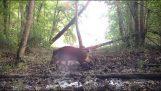 Kamera v lese