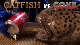 Wolffish head vs Coca-Cola can