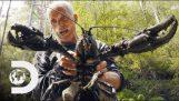 Джереми Уейд намира най-големият раците виждал