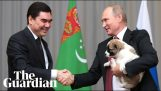 Vladimir Putin wants to save the puppy