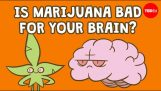 Is marijuana bad for your brain?