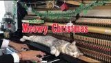 Meowy de Crăciun