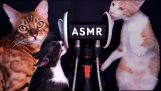 Cats licking a microphone / ASMR