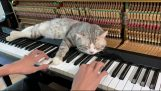 lullaby for cats on piano