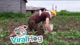 एक बिल्ली बागवानी के साथ मदद करता है
