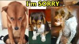 Compilation of guilty dog reactions