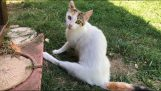 एक अंग के साथ एक बिल्ली का पालन किया और झाड़ियों में एक पूरे परिवार को मिला