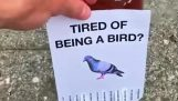 Už vás nebaví vták?