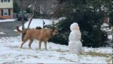 When a dog discovers a snowman