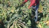 A gazdálkodó nindzsák új szintet értek el