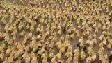 Do wody wpływa duża liczba kaczek jednocześnie