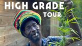"""Jamajczyk Rasta Mokko pokazuje swoje """"ogród"""""""