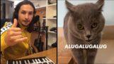 Alugalug 貓 2.0