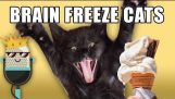 Brain Freeze Cats
