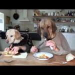 Σκυλίσιο δείπνο