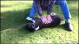Ένας σκύλος σώζεται με τεχνητή αναπνοή