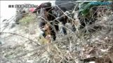 Probabil cel mai socant video de tsunami din Japonia