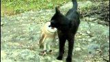 Приятелството на котка с БУХАЛ