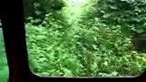 जंगल ट्रेन