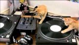 Επαγγελματίες DJ