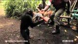 Маймуна с Калашников