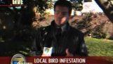 Pomsta vtákov