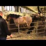Το ηλίθιο άλογο