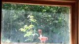 Harmittaa ikkuna