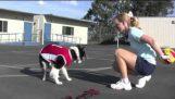 Pes, který hraje basketbal