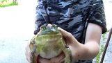Ο βάτραχος κλαίει σαν μωρό