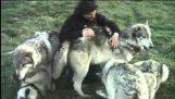 Фотографирование волки