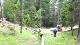 הרים בלונה פארק