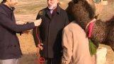 Η ερωτευμένη καμήλα διακόπτει την συνέντευξη