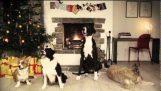 Χριστουγεννιάτικα γαβγίσματα