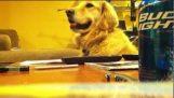 A dog with rhythm