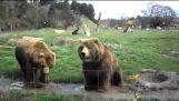 Две дружественные медведи