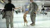 Куче, което ходи на два крака